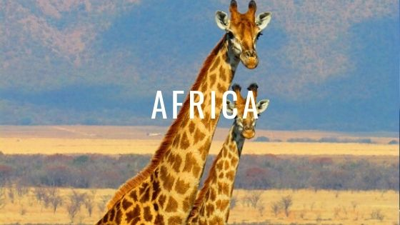 Two Giraffes With The Word Africa.