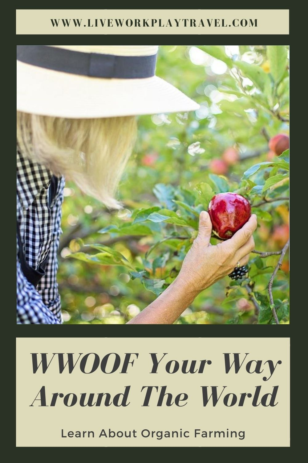 Pinterest Pin Lady With Apple WWOOFing
