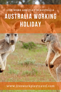 Two Kangaroos To Meet On A Australia Working Holiday.