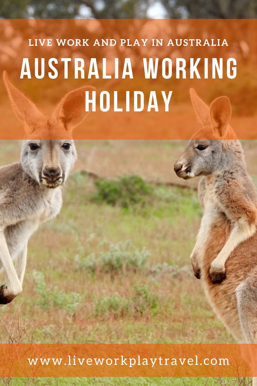 Two Kangaroos To Meet On A Australia Working Holiday.