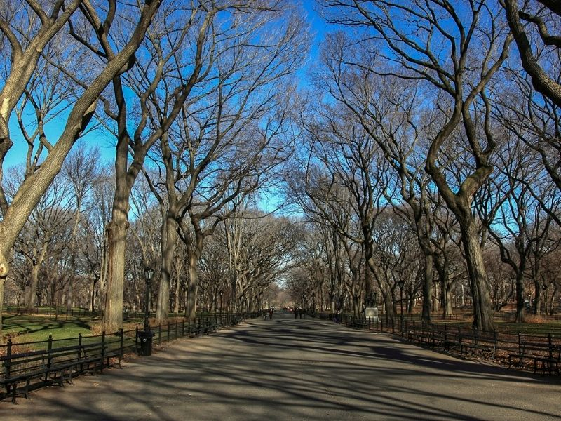 Central Park In New York Is A Great Place To Get Some Exercise.