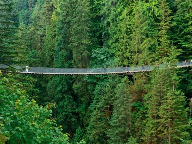 Capilano Suspension Bridge From A Distance In The Forest In Vancouver Canada.